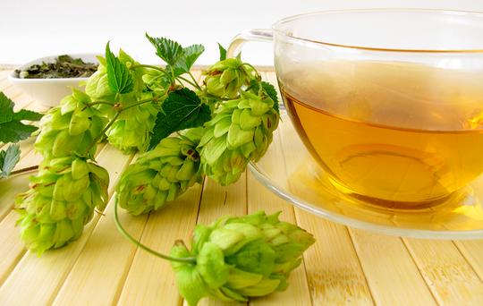 Чай из шишек хмеля