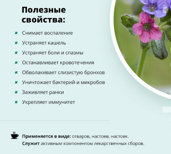 Полезные свойства медуницы