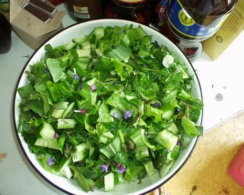 Салат из подорожника и сельдерея